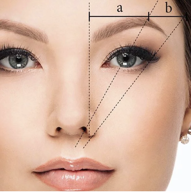 A square image illustration of the golden ratio as it applies to faces